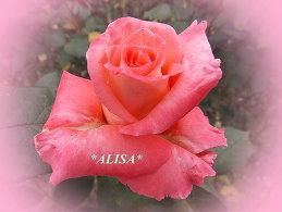 * ALISA *