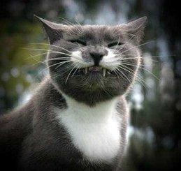 Cats_>(o_o)< ___