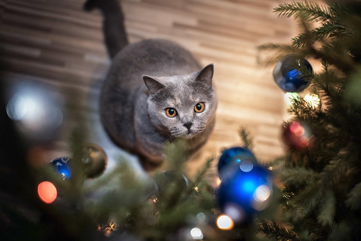 я могу бесконечно смотреть...,как где-то висит новогодняя колбаса...) - Лилия .
