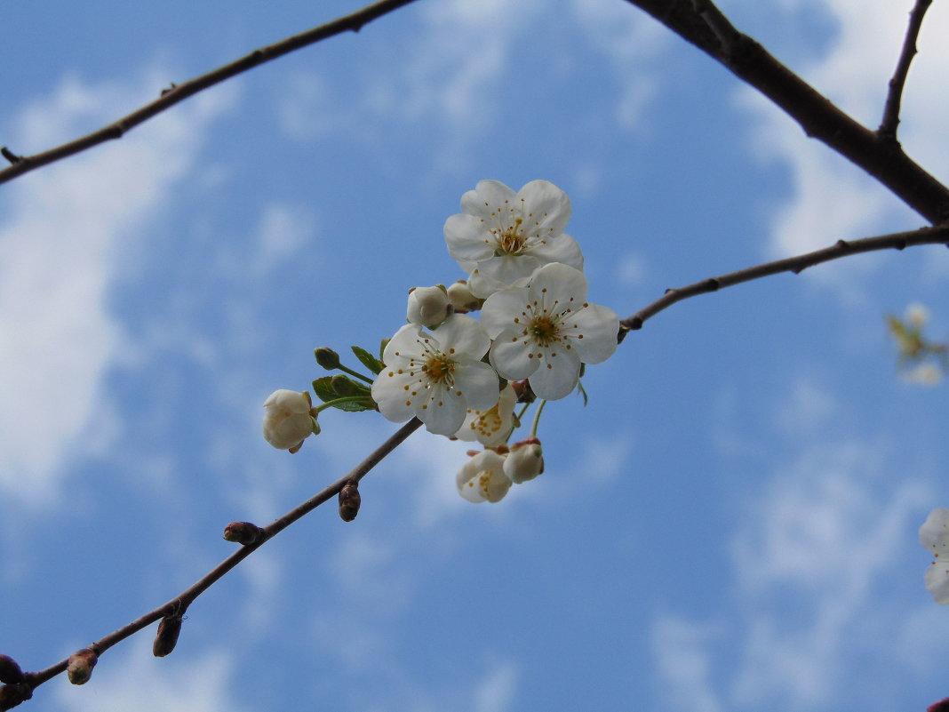 Цветы жизни - LizaVal