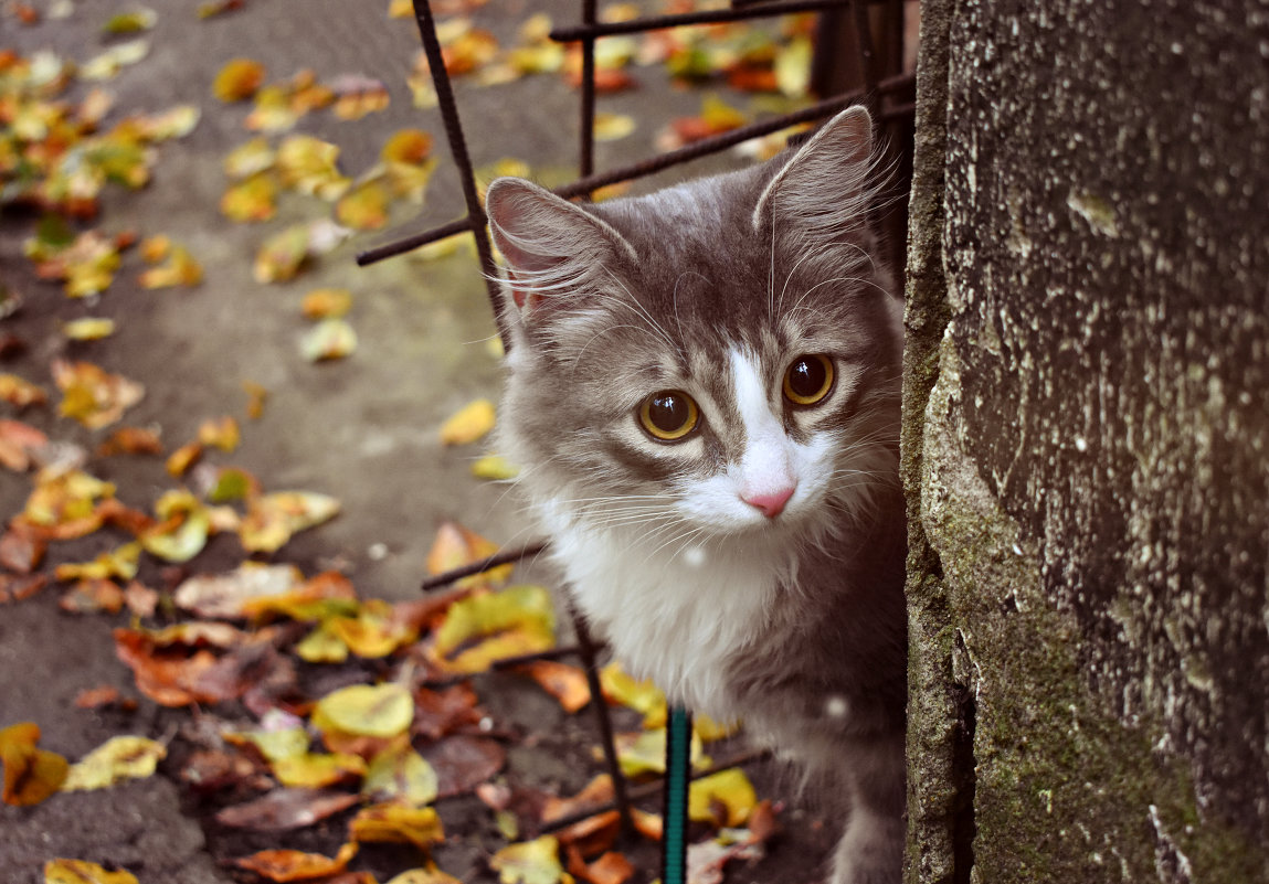Милый и пугливый кот Филипп наслаждается осенью - ...Настя ...