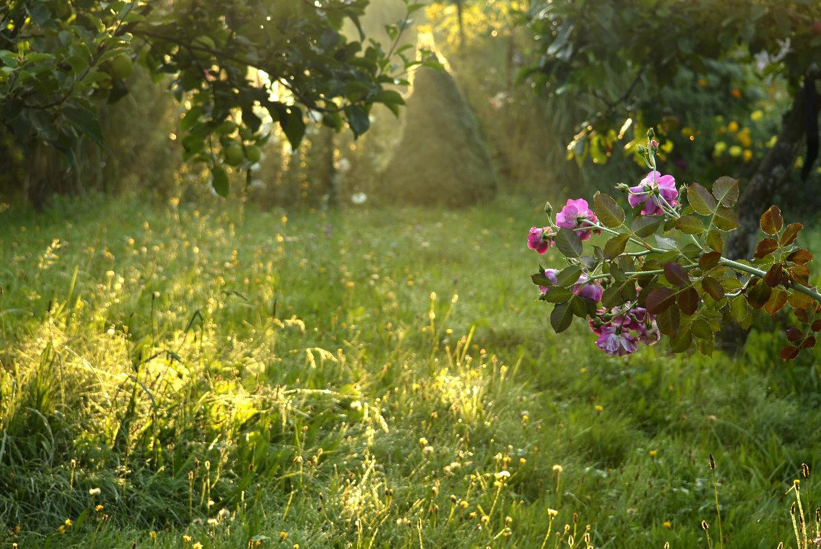 солнечное утро летом - Nina sofronova