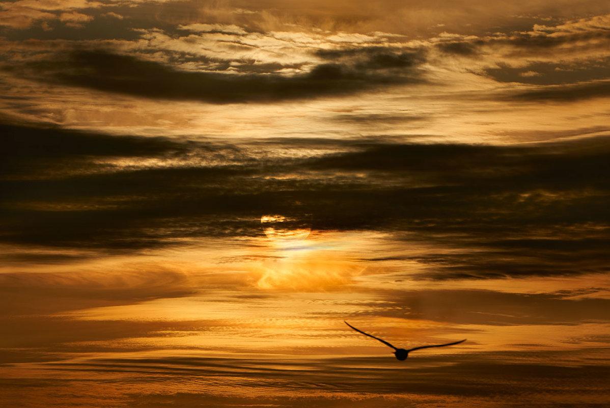 Утренний полёт - Екатерина