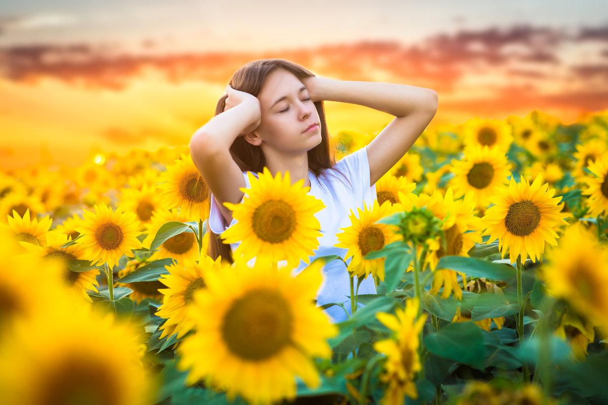 В желтом поле - Любовь Дашевская