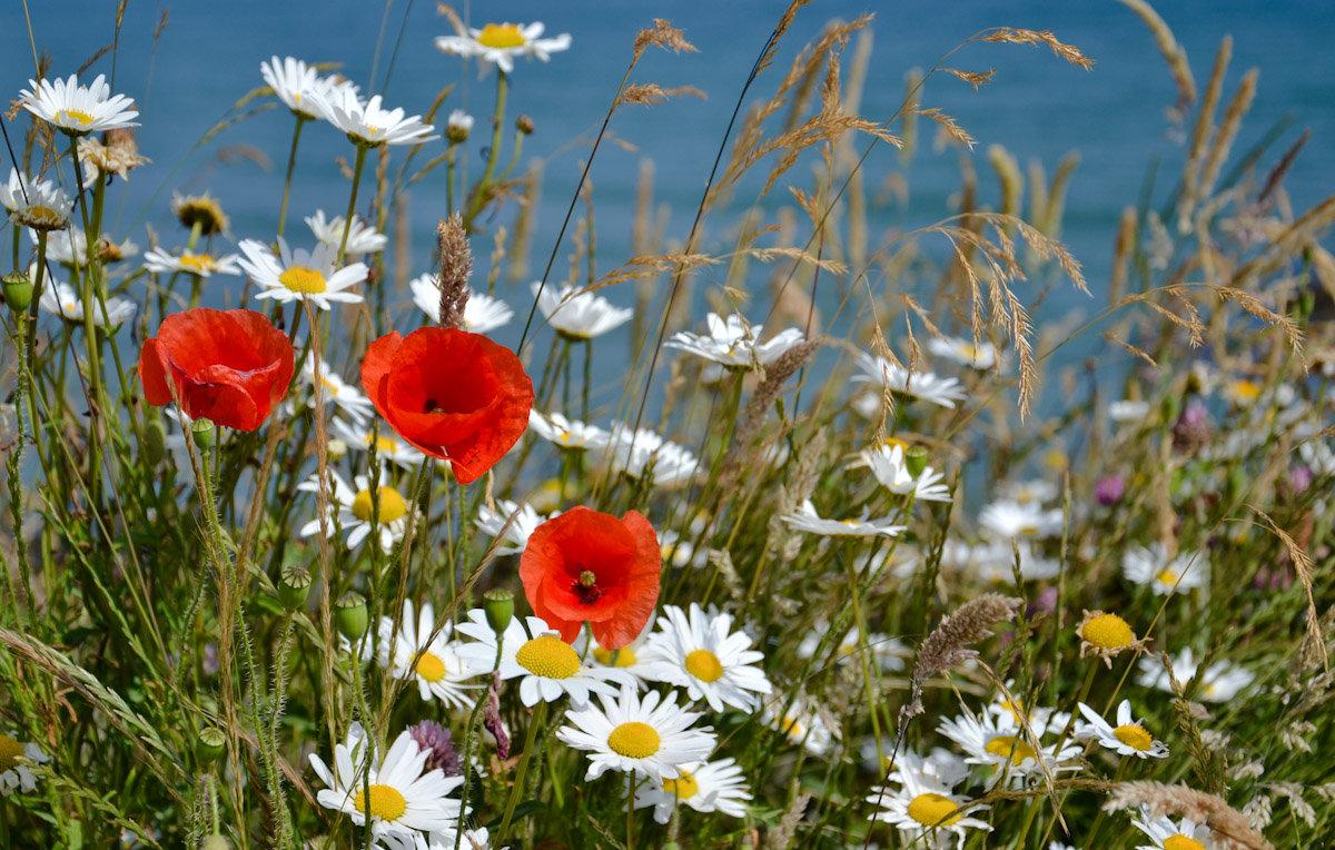 Цветы и Океан - Uno Bica