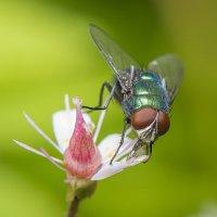В поиске нектара :: Дмитрий Рутковский