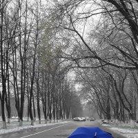 Весна в Сибири :: Сергей Коновалов