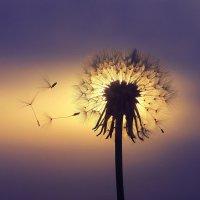 Утренний ветер :: Евгения Фролова