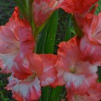 Цветы осени. :: zoja
