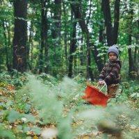 осень в лесу :: Анна Вязьмина-Кирилюк