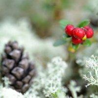 Осенние дары леса :: Павел Назаров