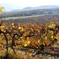 Крымская осень :: Валерия Клобукова