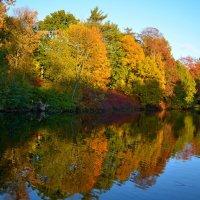 Осеннее волшебство :: Лариса Лунёва