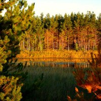 Пионерское озеро :: Лариса Димитрова