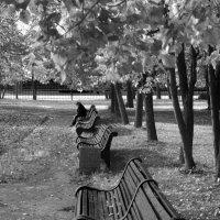 Одиночество. :: Анастасия Глезерис