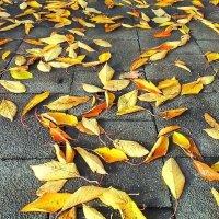Осень под ногами :: Валерий Розенталь