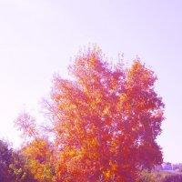 взгляд на осень :: сергамасов