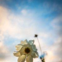 уж небо осенью дышало... :: Наталья Трифонова