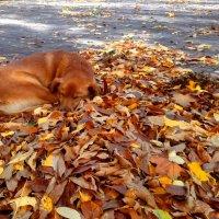Осенний Пес :: Olga