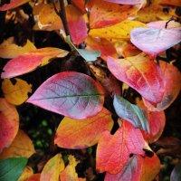 Осенния листва. :: Виктория Чурилова