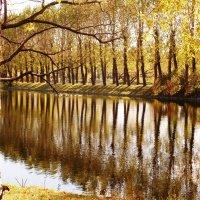 Вертикали Осени. :: Марина Харченкова