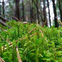 Осенний лес :: Евгений