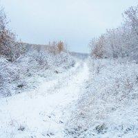 Первый снег :: Арина