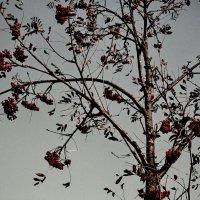 autumn cold :: Юля Рудакова