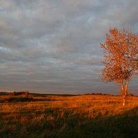 Осенний закат :: Юлия Фотолюбитель