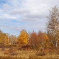 Осень. :: Светлана Н