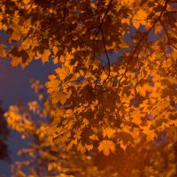 ночь.улица.фонарь.осень. :: Наталья Замятина
