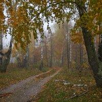 осенняя туманная роща :: Седа Ковтун
