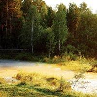 Сказочный лес :: Елена Вохмина