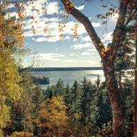 Вид на осень :: Евгения К