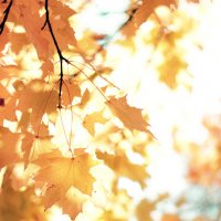 Осенний сон :: mrs_kordillera