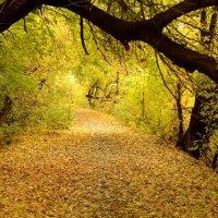 Золотая осень :: Александра nb911 Ватутина