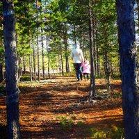 Прогулка по лесам Сибири :: Виктория Артамонова