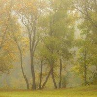 Осень туманная :: Сергей Корнев