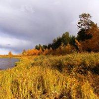 Золотая осень :: Леонид Чащин