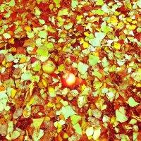 Листья, осень... :: Марина