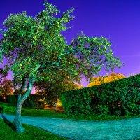 Волшебный яблоневый сон :: Игорь Герман