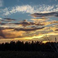 Небесная акварель, закат. :: Лариса Димитрова