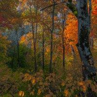 Золотая осень :: Людвикас Масюлис