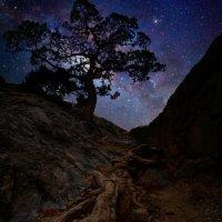 Корень Галактики Млечный Путь :: Александр Михайленко