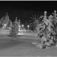 Зимний парк :: Аркадий Иваковский