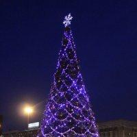 Ёлка на праздничной площади. :: Наталья Золотых-Сибирская