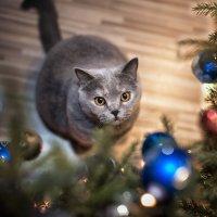 я могу бесконечно смотреть...,как где-то висит новогодняя колбаса...) :: Лилия .