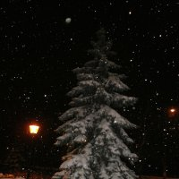 Тиха Рождественская ночь ... :: Алёна Савина