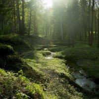Таинственный лес :: Владимир Игошин