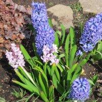 Весенние цветы :: Дмитрий Никитин